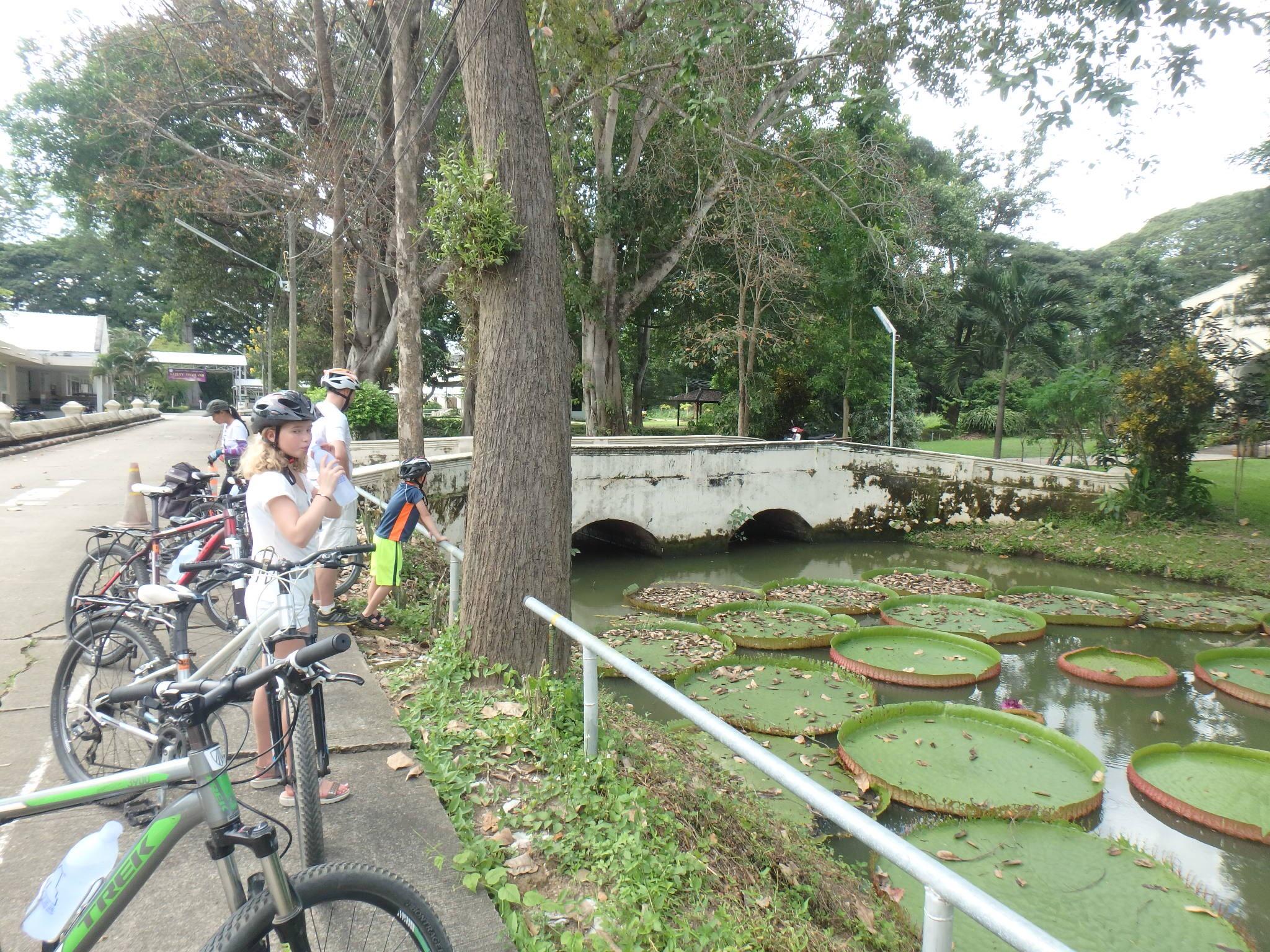 På cykel i Chiang Mai